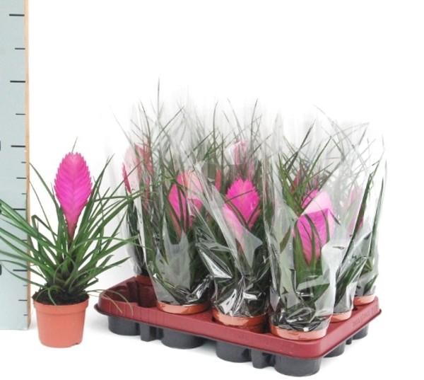 Plantas Interior Con Flor. Good Plantas De Interior With Plantas ...