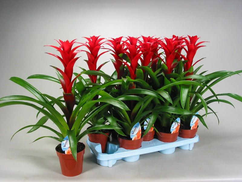 Plantas de interior precios best infografa plantas de for Plantas de interior precios